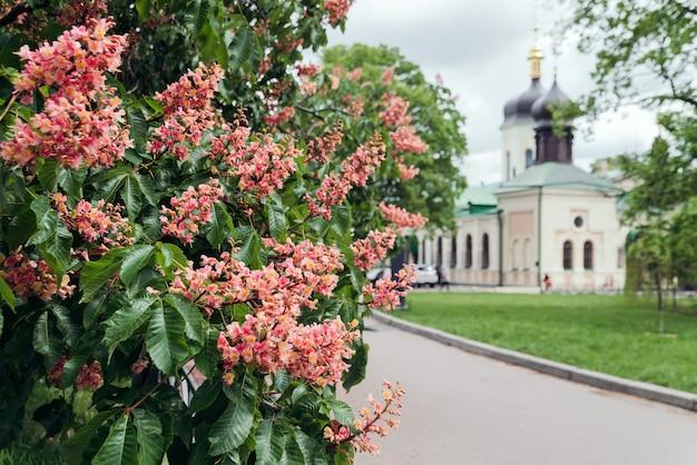 Rode kastanje bloemen tegen de achtergrond van de van de kerk kastanje een symbool van kiev briefkaart Premium Foto