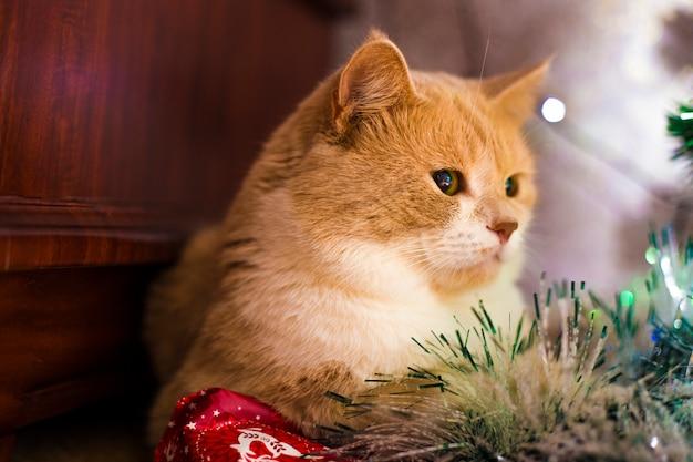 Rode kat die onder de boom op nieuwjaar ligt