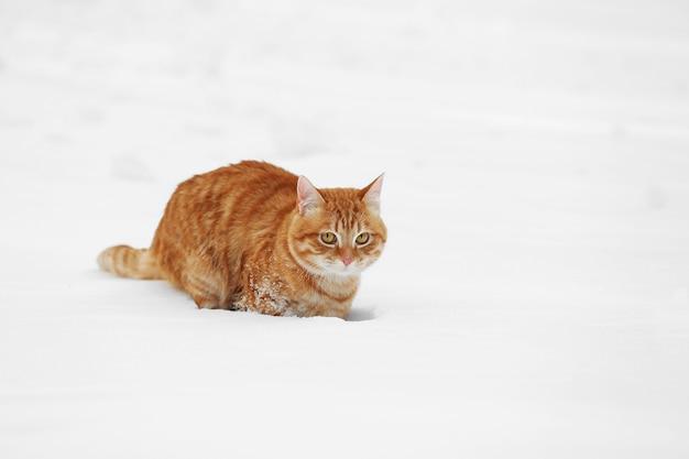 Rode kat die over witte sneeuw loopt