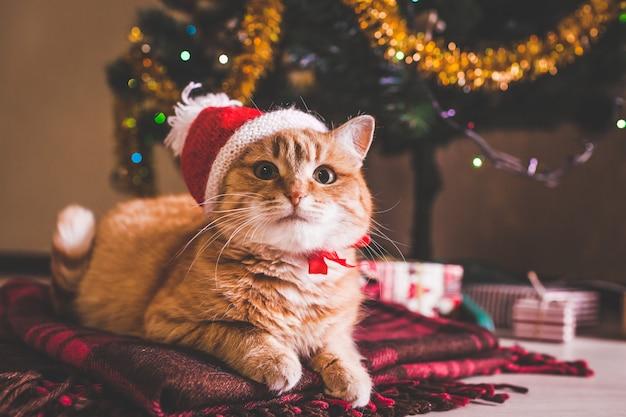 Rode kat draagt kerstmuts onder de kerstboom. kerstmis en nieuwjaar concept