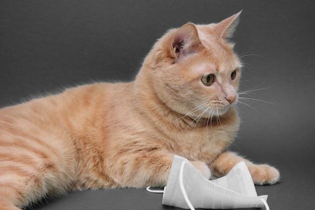 Rode kat in de buurt van medische masker.