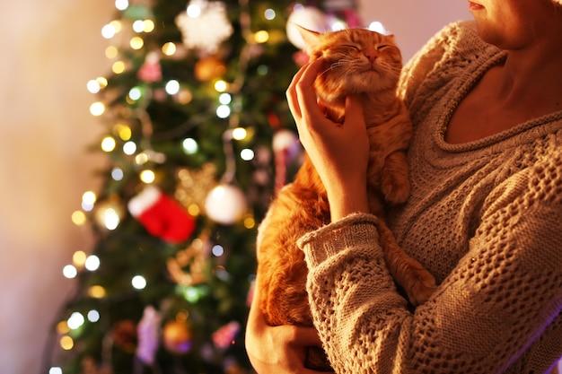 Rode kat in handen in de buurt van de kerstboom