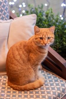 Rode kat in het café. leuke pluizige kat binnenshuis, in het interieur met verlichting.