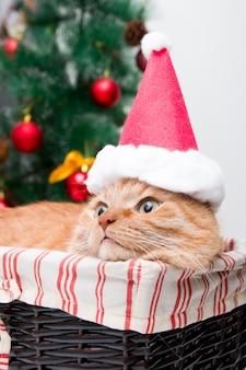 Rode kat in kerstman hoed in een rieten mand
