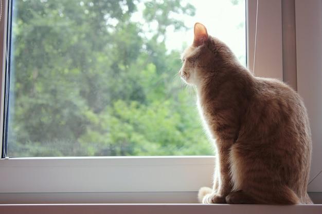 Rode kat leunt achterover op de vensterbank en kijkt uit het raam