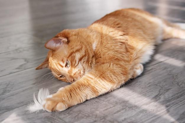 Rode kat liggend op de vloer en spelen met een witte veer