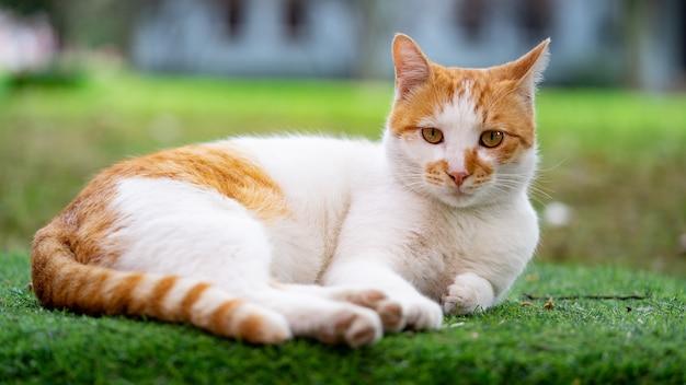 Rode kat ligt op het gras