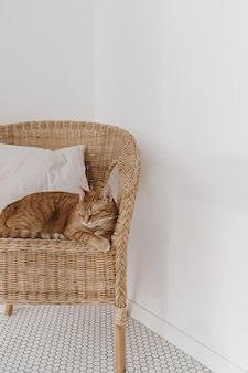 Rode kattenslaap op rotanstoel met hoofdkussen.
