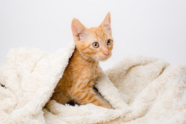 Rode kitten gewikkeld in een deken