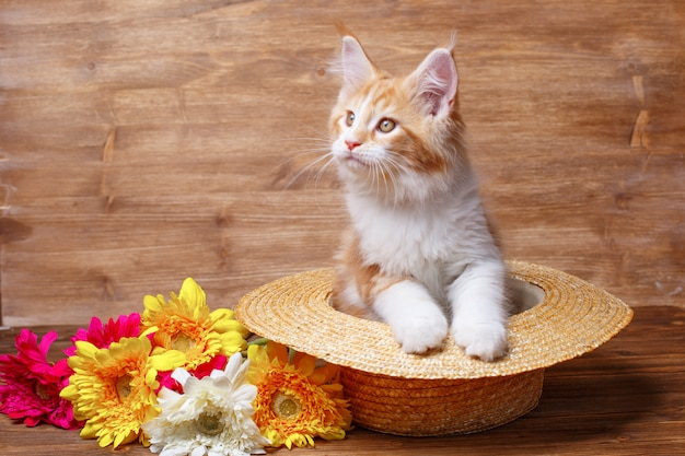 Rode kitten maine coon zittend in een strooien hoed