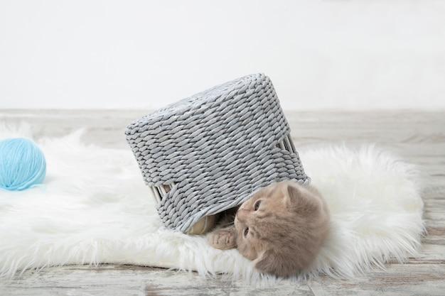 Rode kitten wordt gespeeld met een mandje. leuk gemberkatje