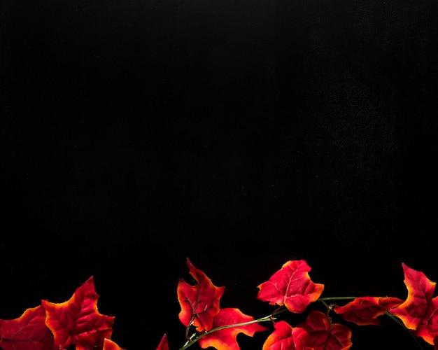 Rode klimopbladeren die op bodem van zwarte achtergrond worden geplaatst