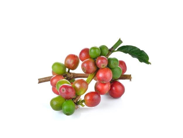 Rode koffiebonen rijpe bessen geïsoleerd op een witte muur