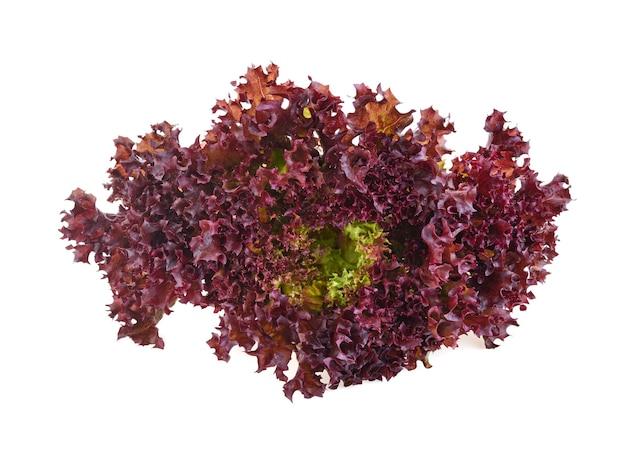 Rode koraalsalade of sla die op de witte achtergrond wordt geïsoleerd