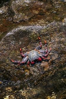 Rode krab op een rots met de zee die in de rots verplettert