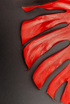 Rode monstera deliciosa. helder monsterablad op een abstracte achtergrond.