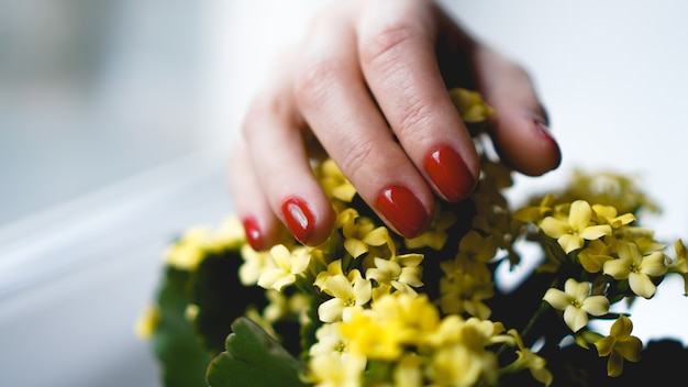 Rode nagels en gele bloemen. mooie compositie van levendige kleuren. verzorgde en gezonde dames handen.
