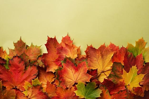 Rode, oranje, gele en groene esdoorn bladeren achtergrond.