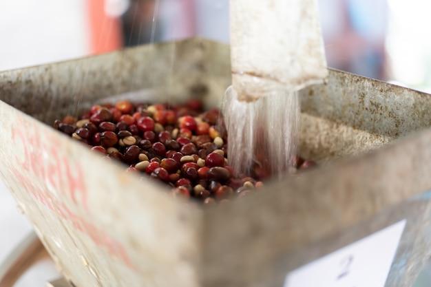 Rode organische koffie kerspulp in koffieverwerking