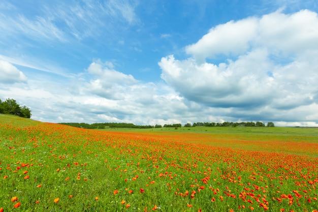 Rode papaverbloemen op een gebiedsachtergrond