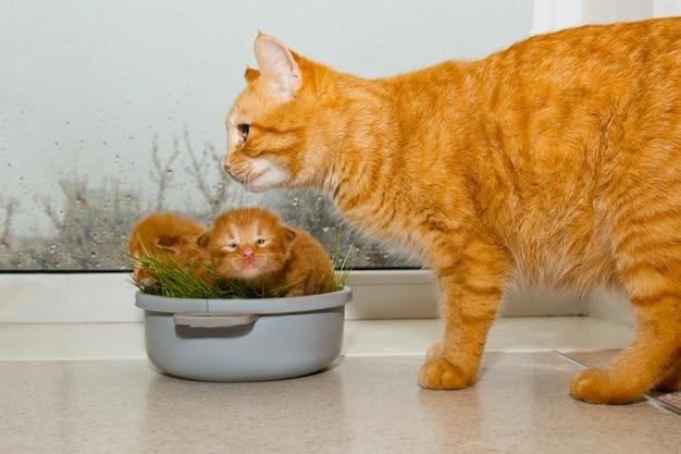Rode pasgeboren kittens zitten in een kom op een witte tafel.
