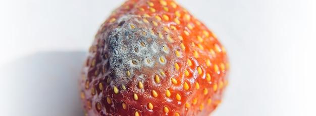 Rode rijpe rotte aardbeien met witte schimmel, selectieve aandacht, close-up. schimmelzwam op tuinbes, niet geschikt voor consumptie. bederfelijke producten, niet-naleving van bewaarcondities.