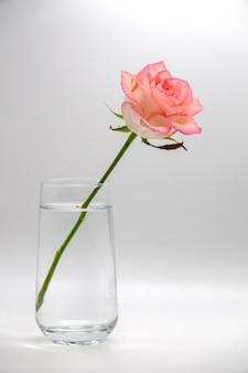 Rode romantische roos in vaas van glas
