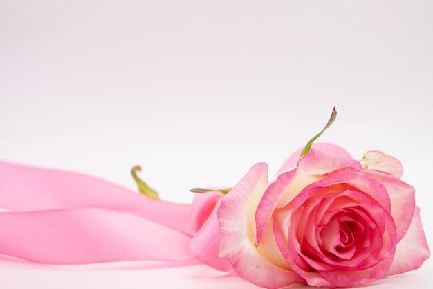 Rode roos en lint op witte achtergrond. valentijnsdag achtergrond