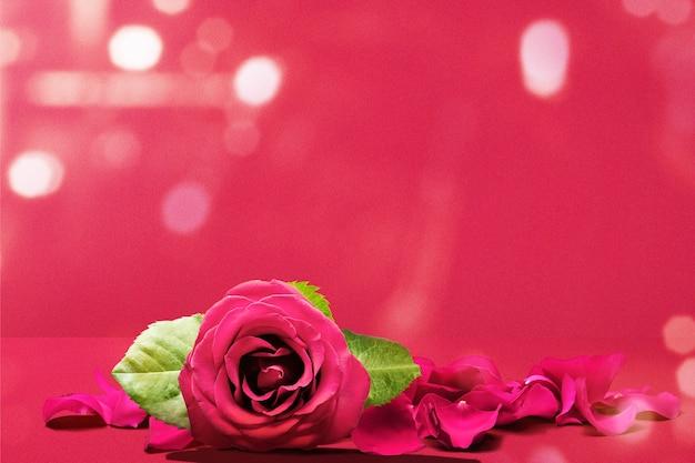Rode roos en rozenblaadjes op een gekleurde muur. valentijnsdag Premium Foto