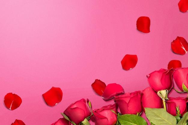 Rode roos en rozenblaadjes op een gekleurde muur. valentijnsdag
