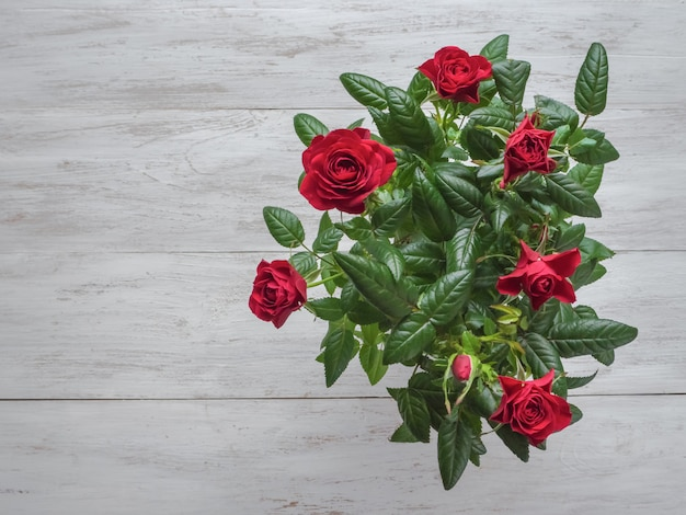Rode roos in een pot op een houten tafel. bovenaanzicht, kopie ruimte.
