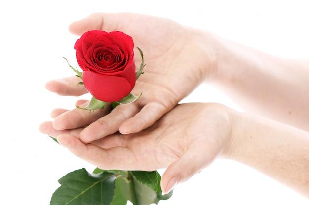 Rode roos in handen