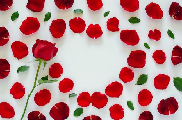 Rode roos met zijn bloemblaadjes en bladeren op wit