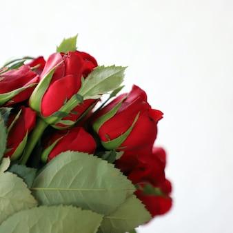 Rode roos multifunctionele achtergrond voor verjaardag, bruiloft, verjaardag of andere vieringen