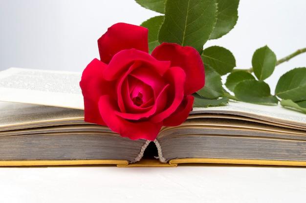 Rode roos op een open boek op een lichte stenen oppervlak. het concept van romantische literatuur