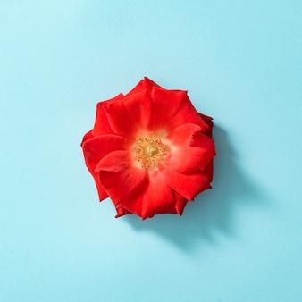 Rode roos op pastelblauw.