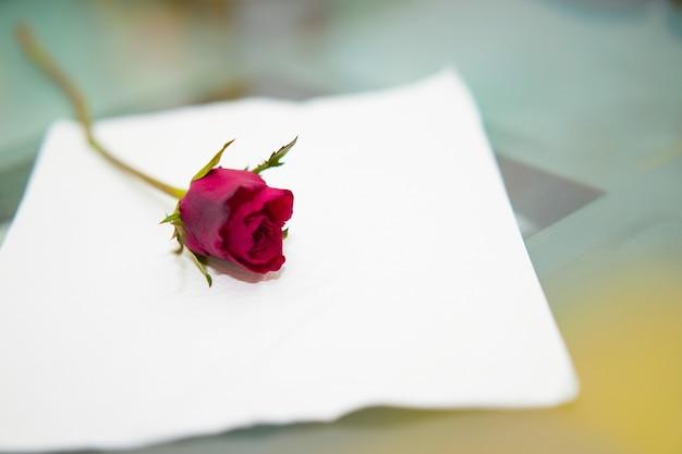 Rode roos op wit papier