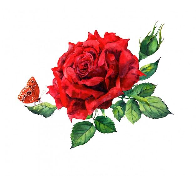 Rode roos, vlinder. waterverfbloem - botanische illustratie