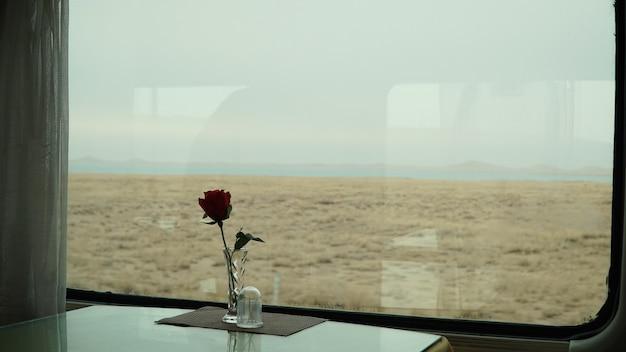 Rode roos voor het raam van de trein