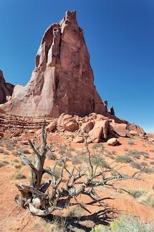 Rode rotsen en dood hout in arches national park, utah