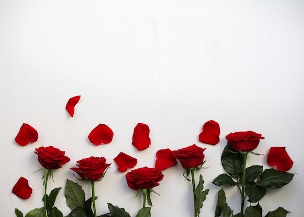 Rode rozen met bloemblaadjes op wit. bovenaanzicht