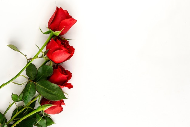 Rode rozen met witte achtergrond