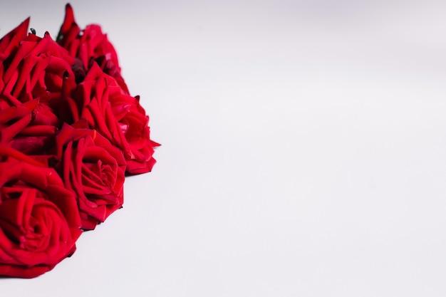 Rode rozen op een witte achtergrond