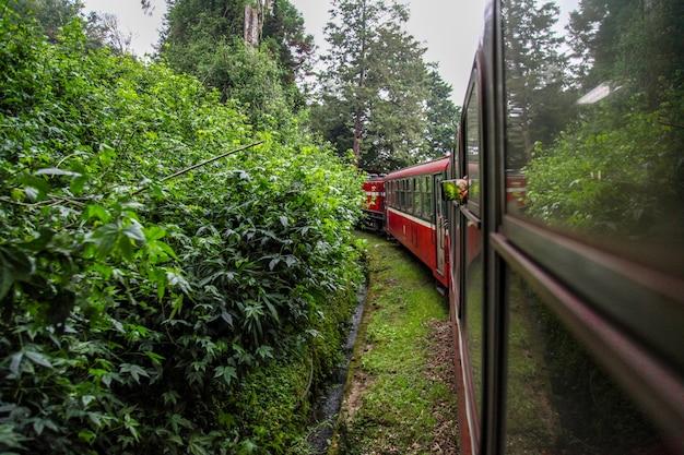 Rode trein die in mistige dag bij alishan lijn op alishan berg, taiwan in werking wordt gesteld.
