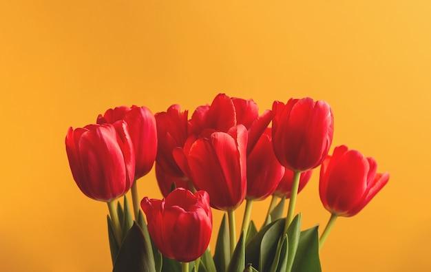 Rode tulpen op een gele helder
