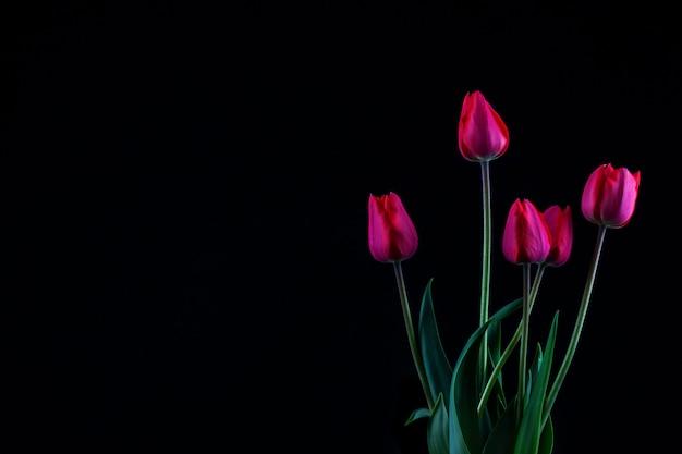 Rode tulpen op zwart met copyspace, in rustig
