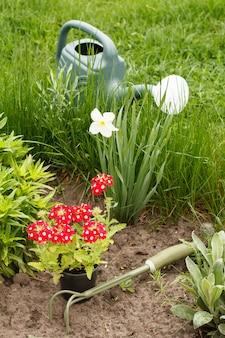 Rode verbena bloemen, handhark en gieter in een tuinbed.
