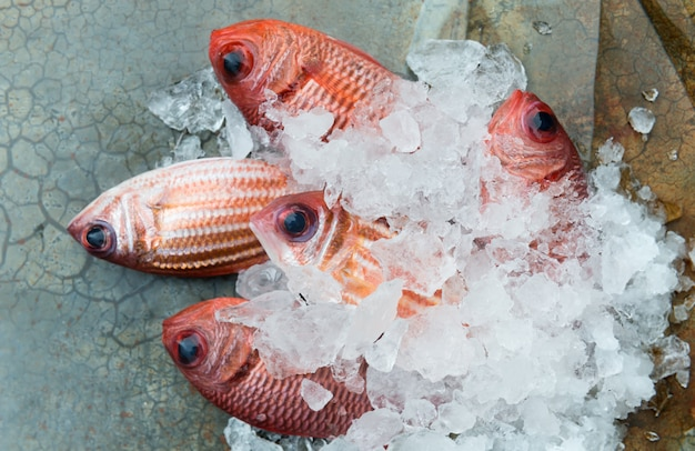 Rode vis uit de visserij markt.