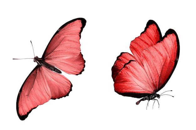Rode vlinder. natuurlijk insect. geïsoleerd op witte achtergrond