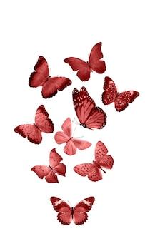 Rode vlinders geïsoleerd op een witte achtergrond. tropische motten. insecten voor ontwerp. aquarel verven